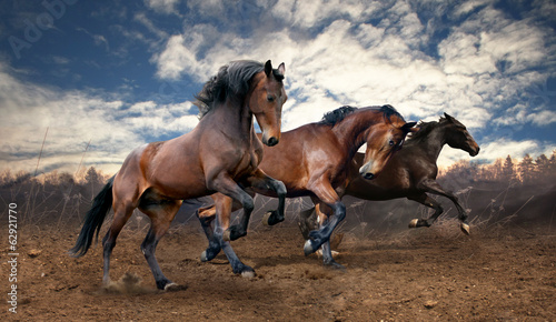 Tuinposter Paarden wild jump bay horses
