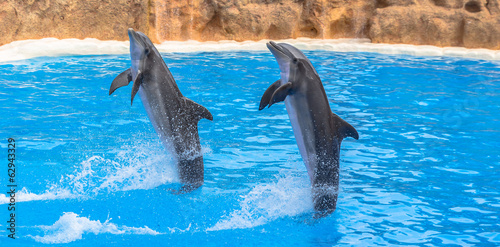 In de dag Dolfijn Dolphins performing a tail stand in a pool in a park show