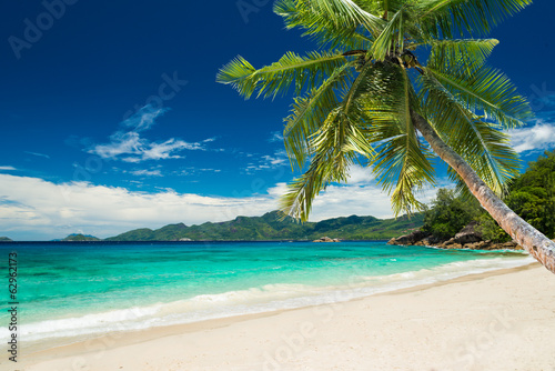 Plakat tropical beach with palm