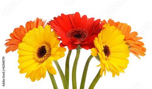 Foto op Canvas Gerbera Gerbera daisy