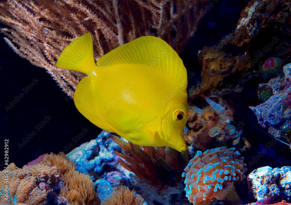 Fototapeta Piękno Morskich Głębin