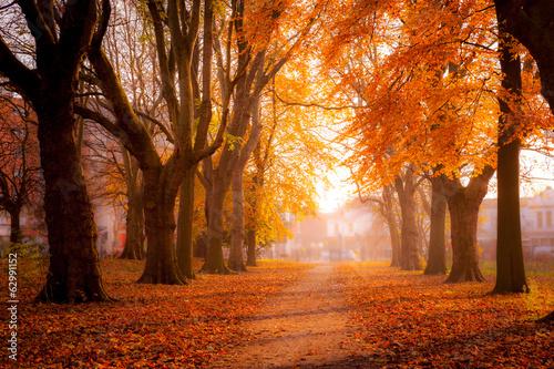 Fototapeta Colorful trees in Park obraz na płótnie