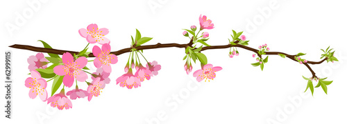 Fotografia  kirschbaum, kirsche, blüte, cherry blossom, bloom, branch, tree