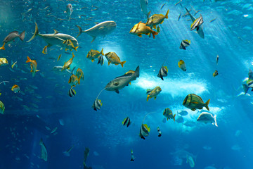 fototapeta kolorowe ryby