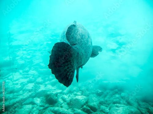 Staande foto Koraalriffen fish