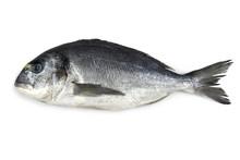 Fresh Bream Fish Isolated