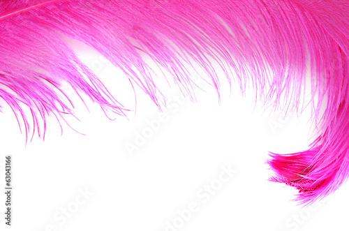 Różowy piękny piórko odizolowywający na bielu
