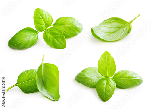 Fotografía  Basil leaves spice closeup isolated on white background.