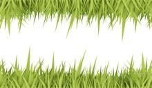 Green Grass Concept Card
