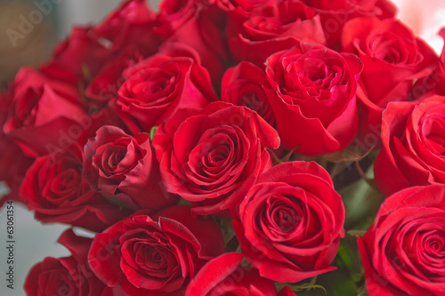 roses background #63061354