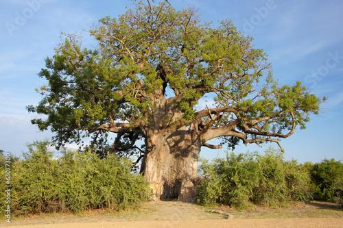 Recess Fitting Baobab Baobab