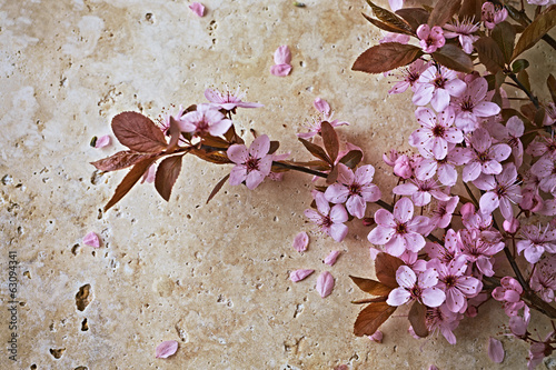 kwitnace-rozowe-kwiaty-na-kamiennym-tle