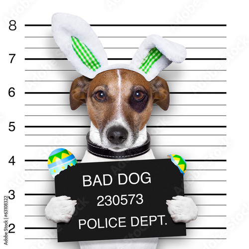 Fototapety, obrazy: easter mugshot dog