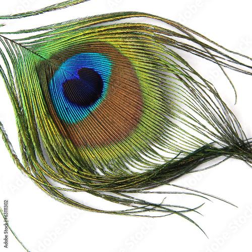 Foto op Plexiglas Pauw Peacock feather isolated on white background - Close-up view