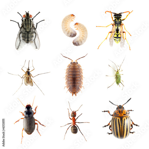Fotografie, Obraz  Garden pests. Collection of the insects on a white background.
