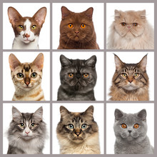 Nine Cat Heads Looking At The ...