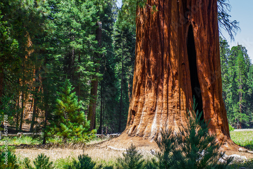 Poster de jardin Parc Naturel Sequoia NP