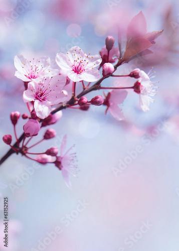 wiosenny-kwitnacy-drzewo-tlo