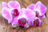 Fototapeta Orchid - Orchidea