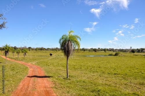 Fotografija  Farm in Pantanal, Mato Grosso (Brazil)
