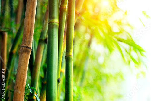 Printed kitchen splashbacks Bamboo Bamboo Forest