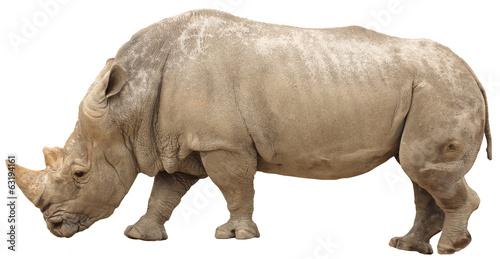 Rhino rhino isolated
