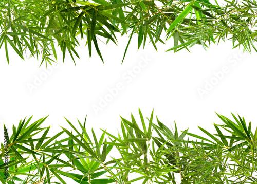 bordure de bambou, fond blanc