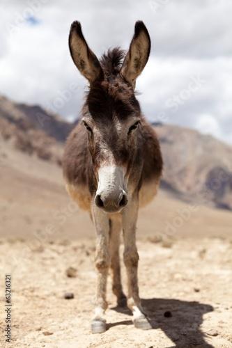Deurstickers Ezel Portrait of Donkey