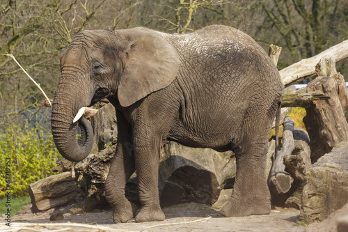 Photo Stands Parrot Afrikaanse olifant