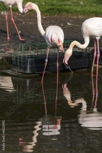 Photo Stands Parrot Flamingo's