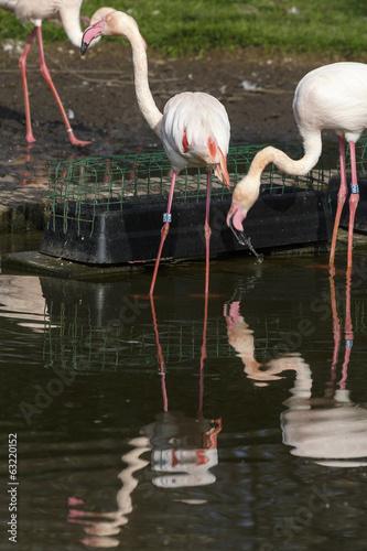 Garden Poster Parrot Flamingo's