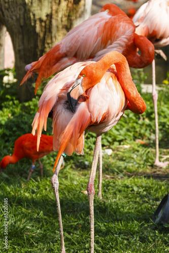 Garden Poster Parrot Cubaanse flamingo