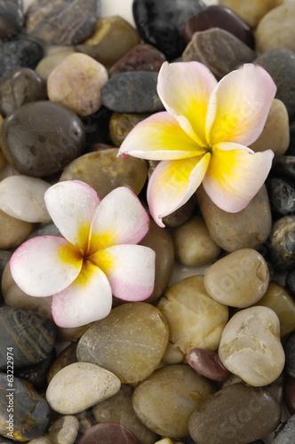 przepiekna-orchidea-na-kamieniach