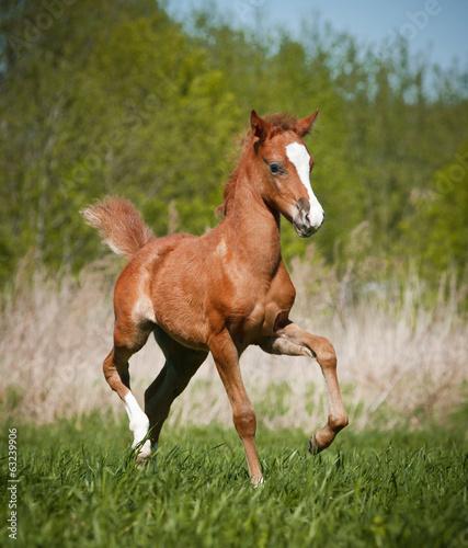 Fotografia, Obraz foal