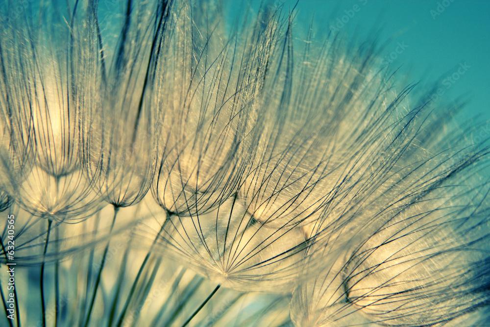 Fototapety, obrazy: Blue abstract dandelion flower background