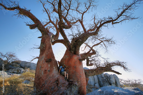 In de dag Baobab Baobab on Kubu island in winter