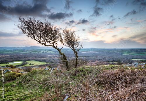 Valokuva  Windswept Tree