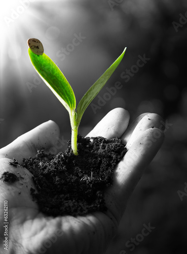 exclusive - agriculture concept , little plant in hand Wallpaper Mural