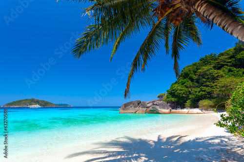 Photo Stands Tropical beach palm tree on a white beach