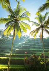Rizière en terrasse, Bali, Indonésie