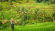 Leinwanddruck Bild - Bali, rizière en terrasse