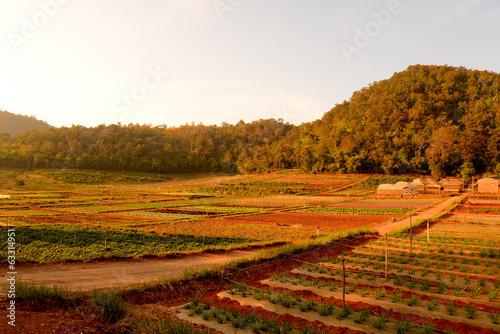 Aluminium Prints Autumn Vegetable Plants in Garden