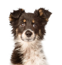Portrait Mixed Breed Dog. Isol...