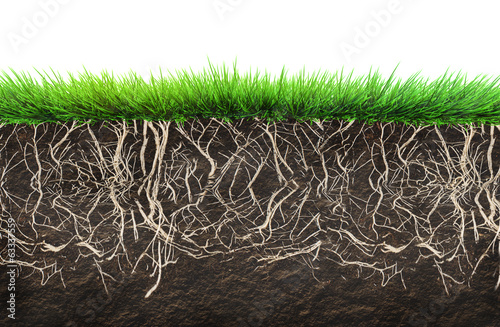 Photo  grass and soil