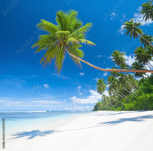 Tropical paradise with palm trees blues sea and white sand