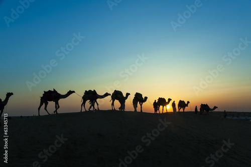 Spoed Foto op Canvas desert local walks with camel through Thar Desert