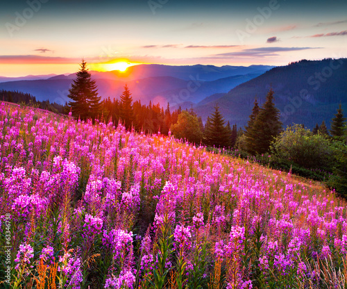 Fotobehang Landschap Beautiful autumn landscape in the mountains with pink flowers.