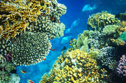 Canvas Prints Under water Coral reef