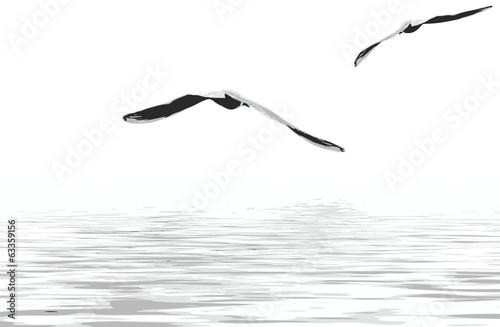 Fotografia, Obraz  Sea gulls