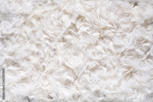 Background texture of soft white feathes